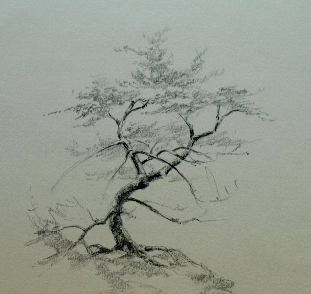 Tree Drawing Pencil at GetDrawings.com | Free for personal use Tree ...