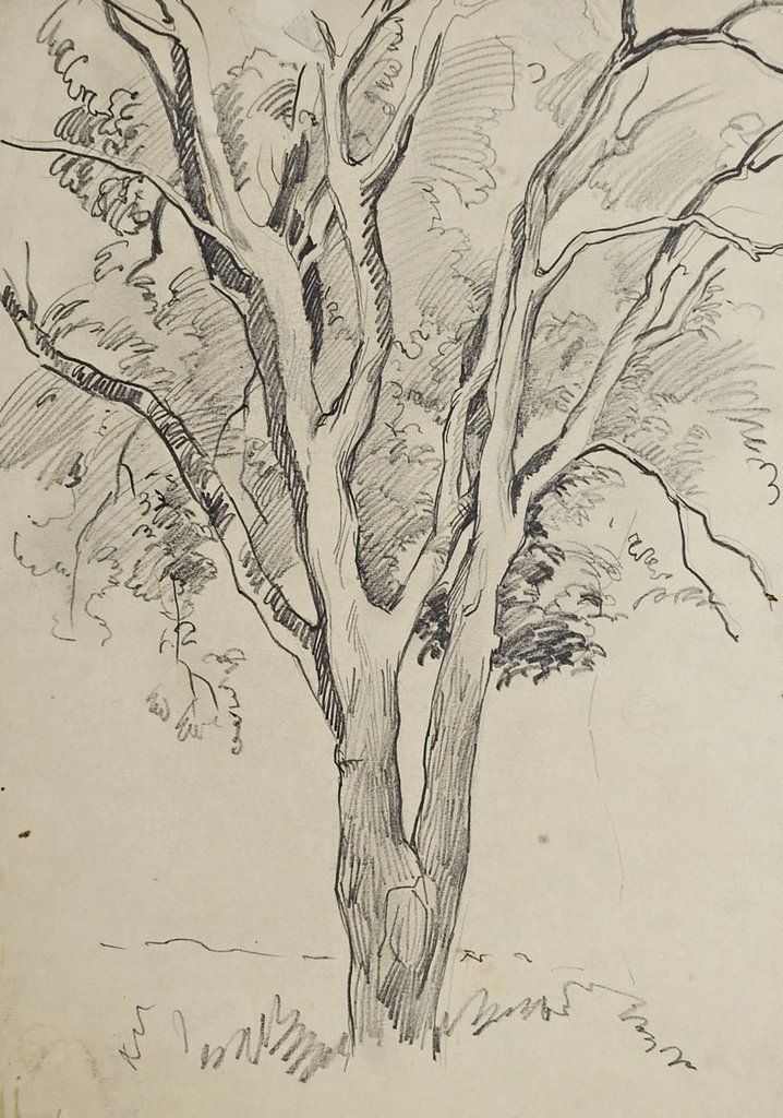 718x1024 Tree Pencil Study Drawing By George Baer Draw, Drawing Ideas