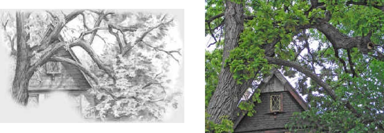 1298x450 To Draw Trees With Pencil