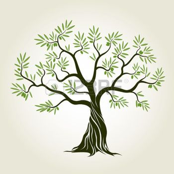 350x350 Olive Tree Olive Tree With Leafs. Vector Illustration