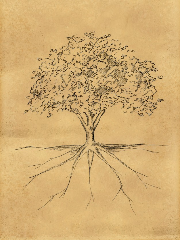 626x836 Tree Roots Vectors, Photos And Psd Files Free Download
