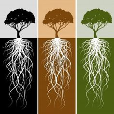 236x236 Live Oak Tree Cliprt Blacknd White Graphic Depicting