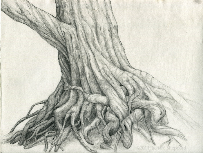 700x530 Sketch Of Twisted Tree2 Ink Amp Metal Sketches, Tree