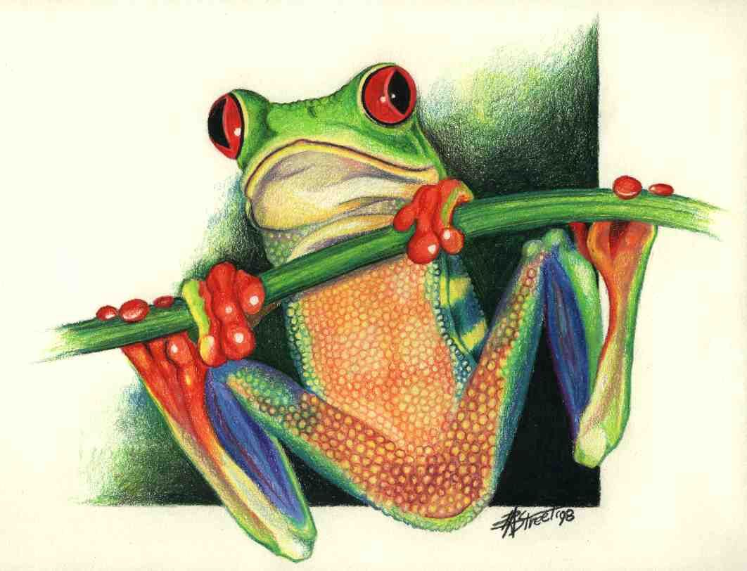 Tree Frog Drawing at GetDrawings.com | Free for personal use Tree ...