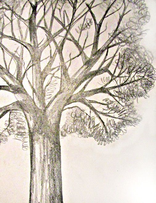506x660 152 Best Drawing Trees Images On Drawing Tutorials
