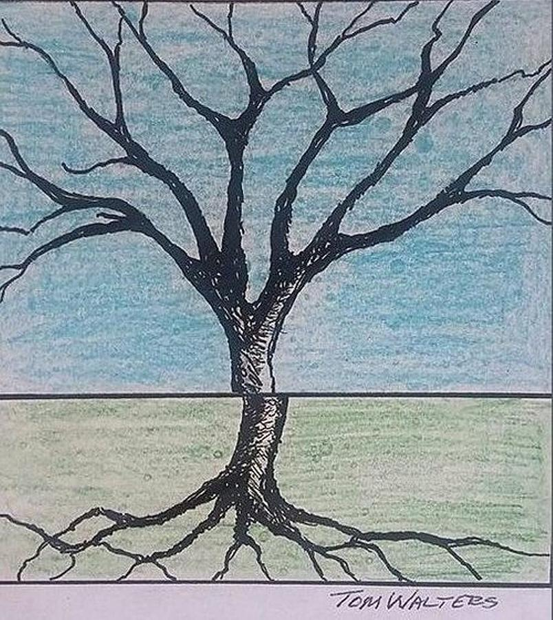 804x900 Tree In Winter Drawing By Thomas Walters