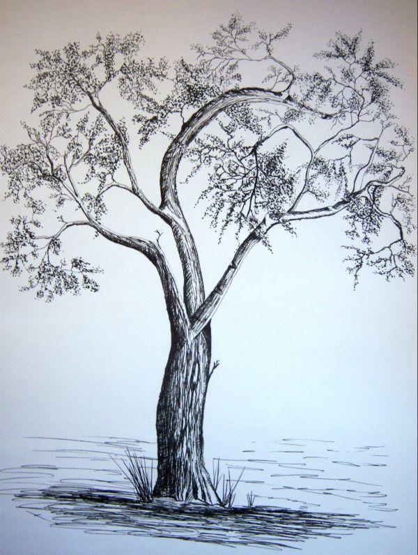 600x796 Ink Drawings Adamsart