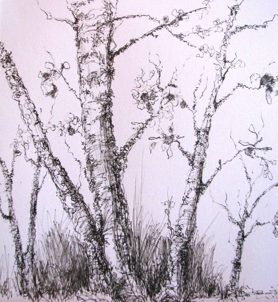 920x1000 Kim Blair Pen And Ink Drawing,tree Study, By Canadian Artist Kim