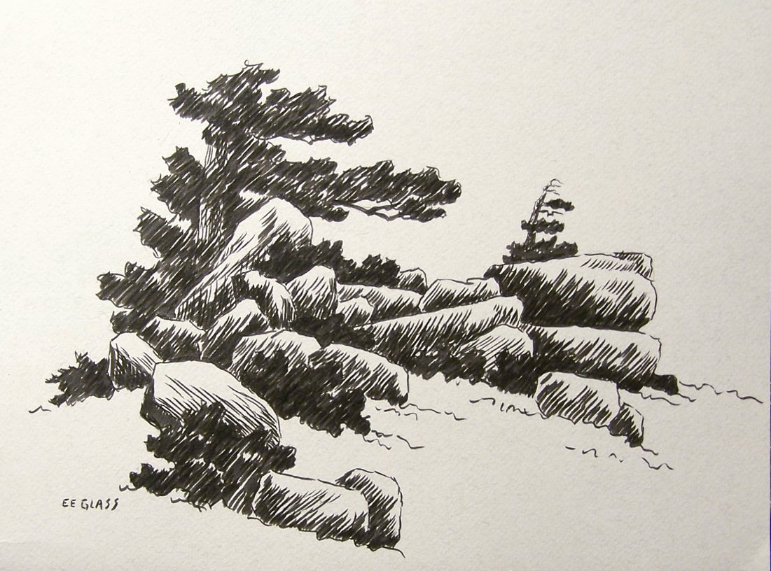 1101x816 Drawing Pine Trees In Pen