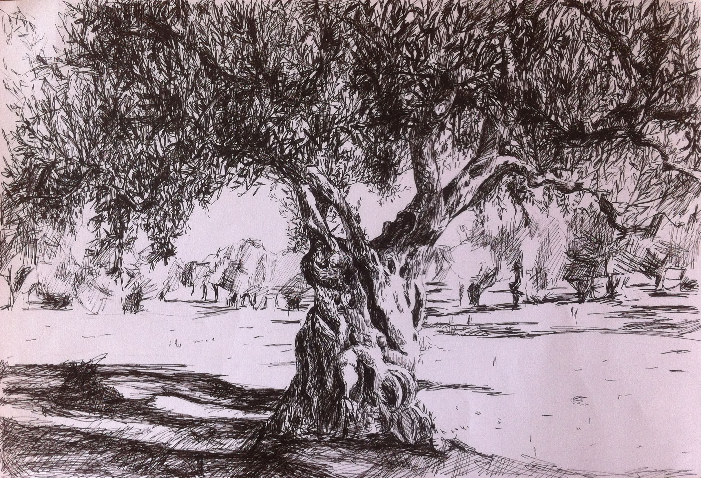 2420x1652 Part 3 Outdoors Exercise 1 Sketching Individual Trees Rosefineart
