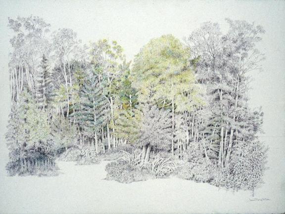 576x433 Tree Landscape Joan Berg Victor Drawing Item 504386