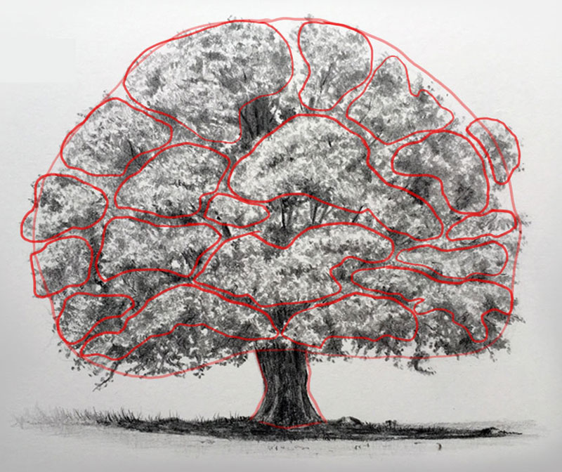 800x672 Gallery Draw A Tree With Leaves,
