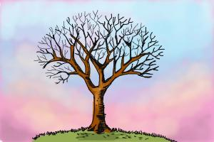 300x200 How To Draw A Tree Without Leaves