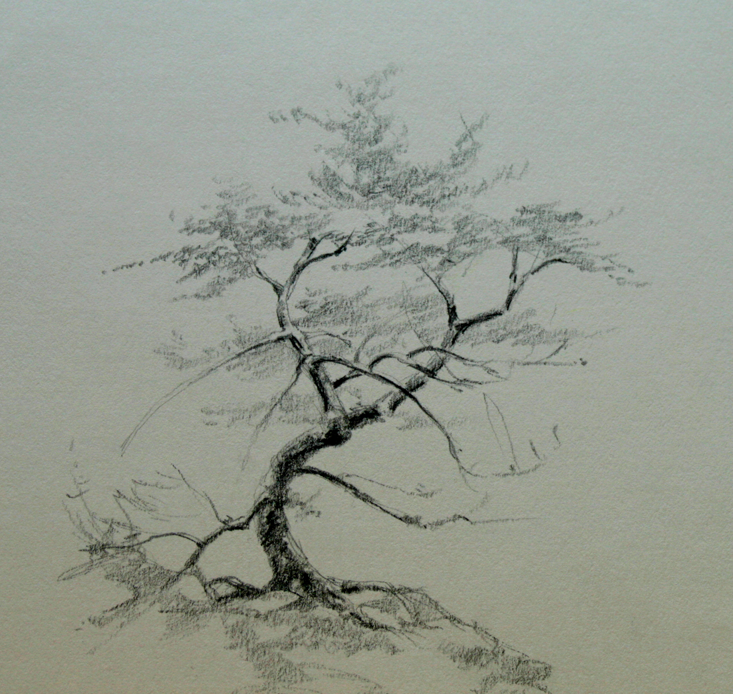 Tree Pencil Drawing at GetDrawings.com | Free for personal use Tree ...