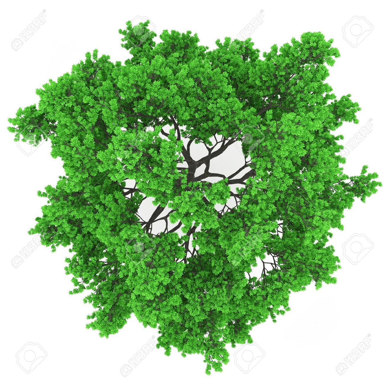 1300x1300 Tree Plan View Png Trees Pinterest