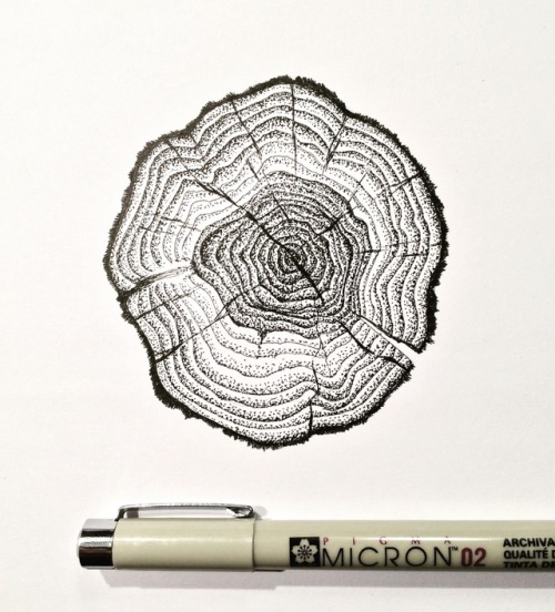 Tree ring drawing at getdrawings free for personal use tree 500x552 tree rings tattoo tumblr ccuart Images