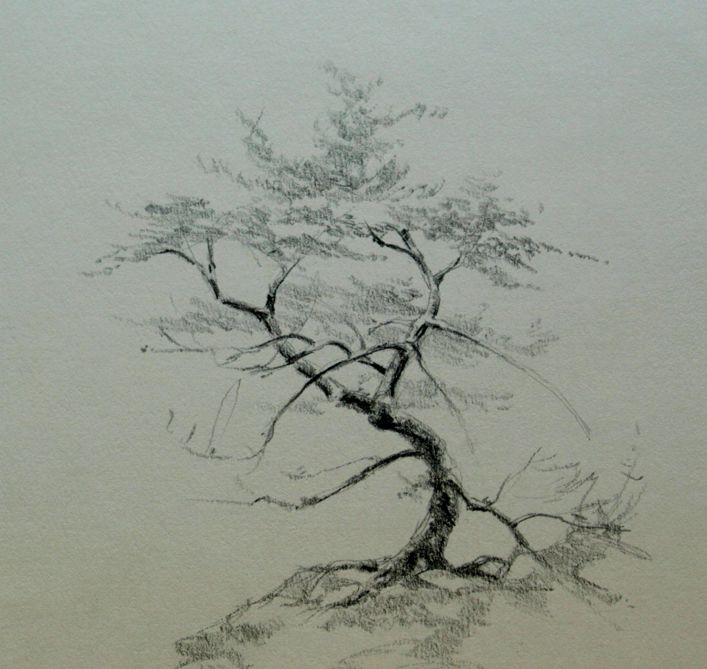 Tree Sketch Drawing at GetDrawings.com | Free for personal use Tree ...