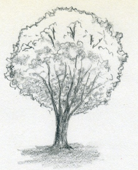 442x546 Draw A Tree Simply And Easily