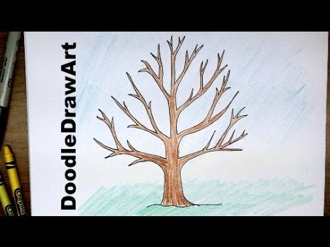 480x360 How To Draw A Tree Without Leaves