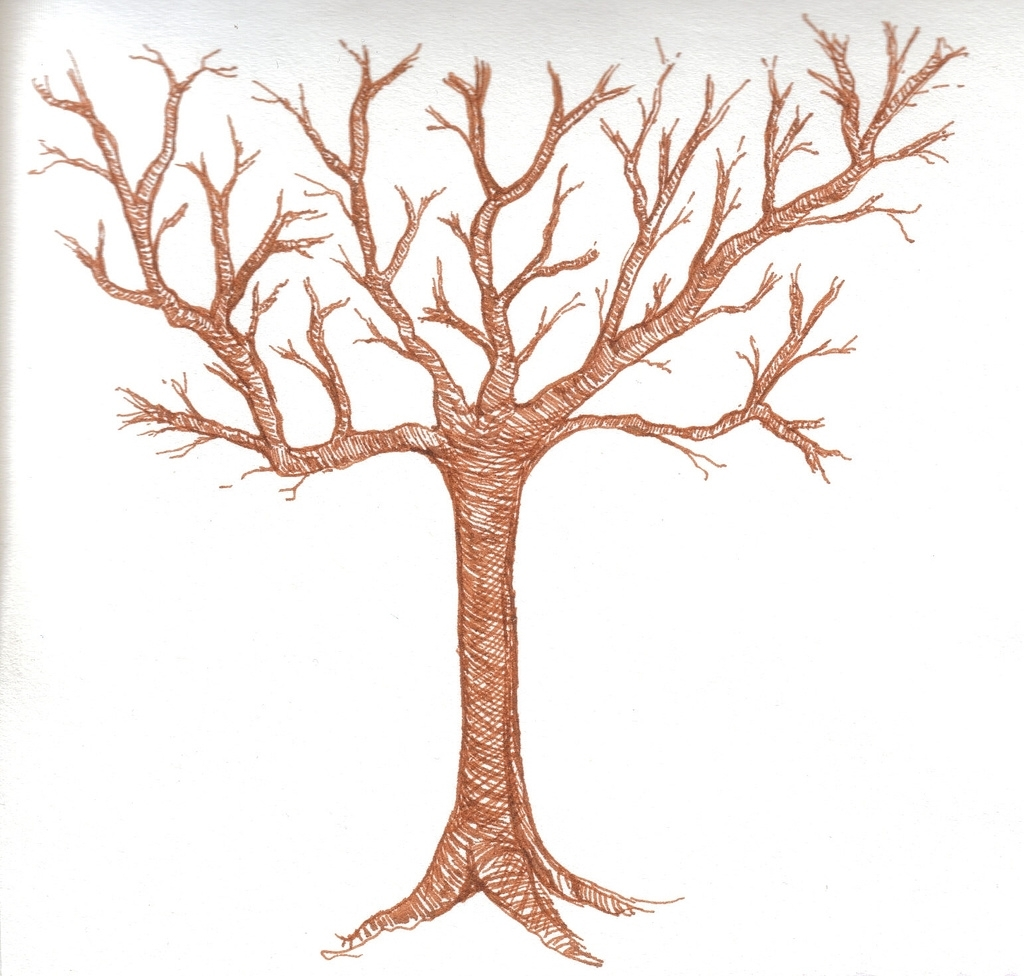 1024x976 Drawings Of Trees With Leaves Picture Of A Tree Without Leaves