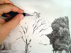 300x225 How To Draw Trees (Part 2) By Diane Wright