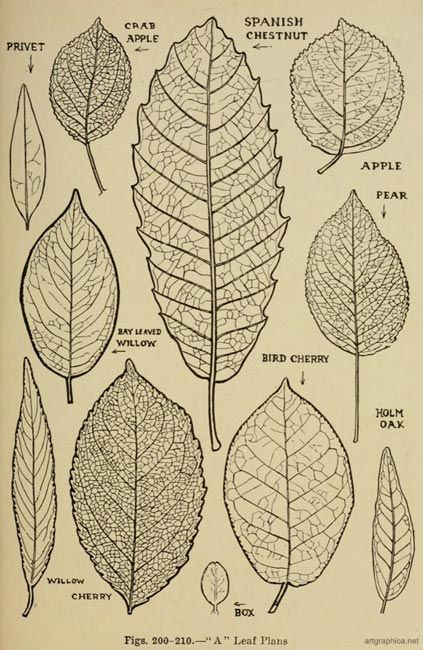 423x650 How To Draw Tree Leaves Art Tree Leaves, Leaves