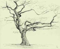236x193 Line Drawing Leaves Twisting Tree By Ellfi
