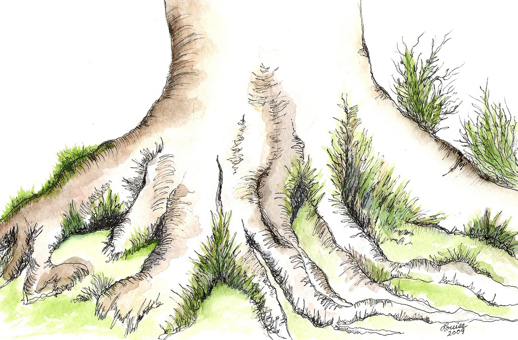 1024x673 Tree Roots Watercolor Amp Ink Continuing My Love Affair