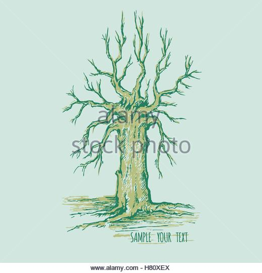 520x540 Old Oak Tree Without Leaves Stock Photos Amp Old Oak Tree Without