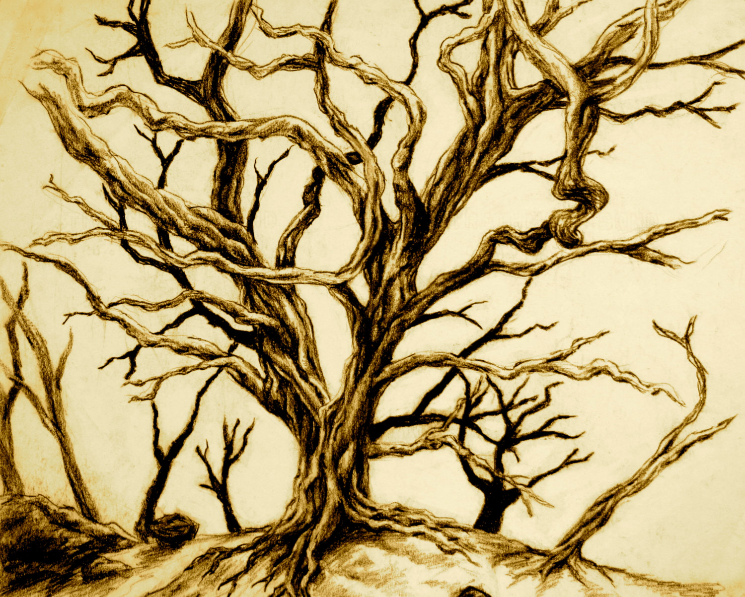 Tree Without Leaves Drawing at GetDrawings | Free download