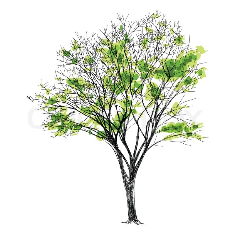 800x800 Pictures Hand Drawn Pictures Of Trees,