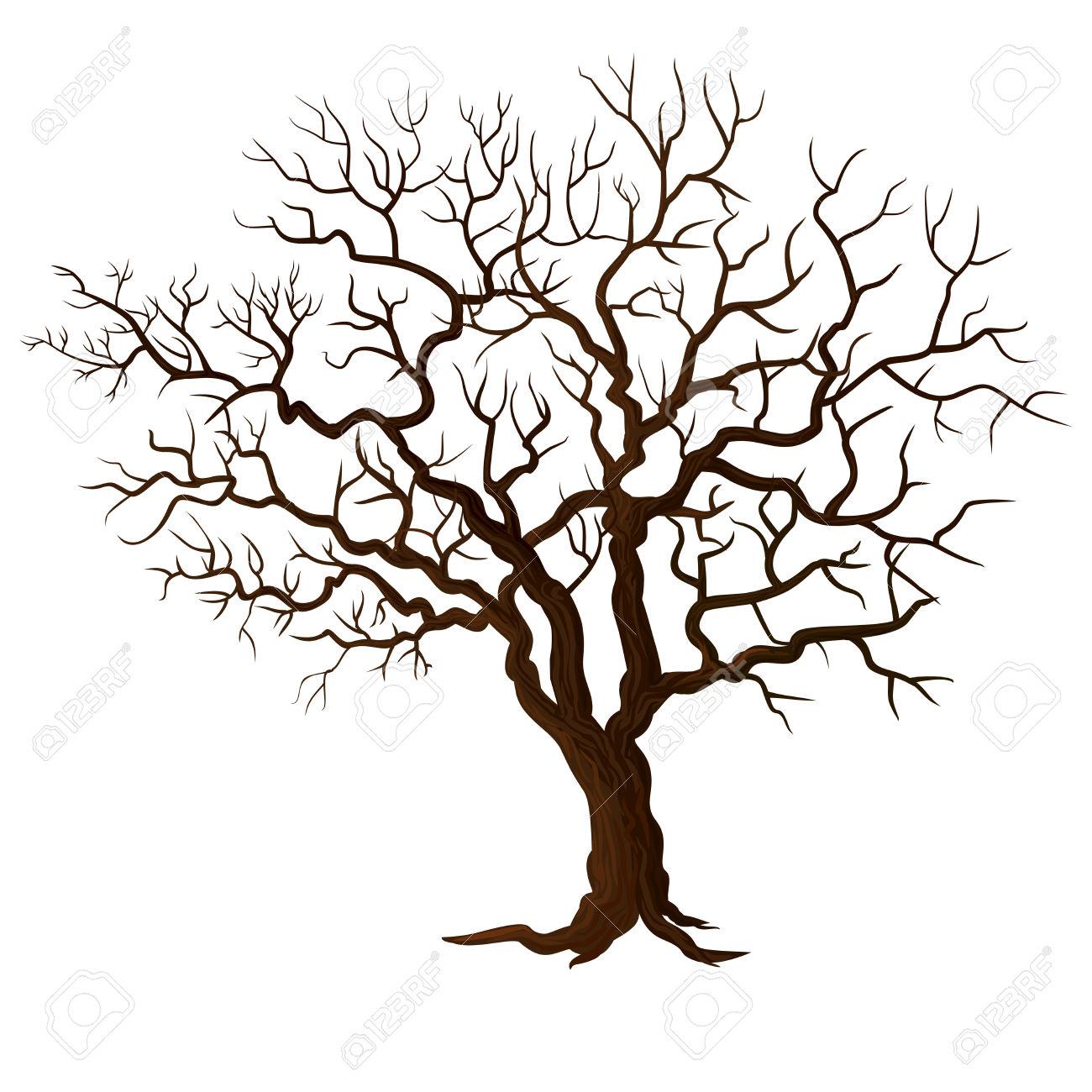 1300x1300 European Beech Tree Drawing