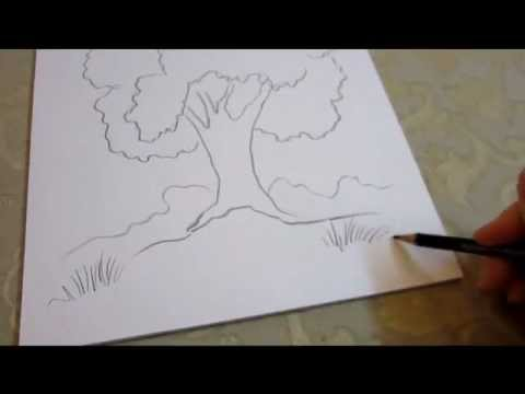 480x360 How To Draw A Tree
