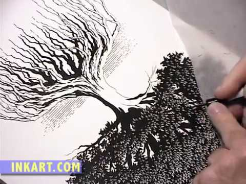 480x360 Scratchboard Illustration Of An Oak Tree With Roots