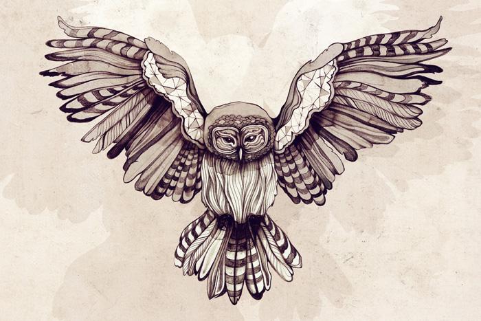 700x467 Owl By Sara Blake Birds Feathers Design