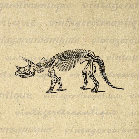 570x570 Digital Graphic Triceratops Dinosaur Skeleton Download Image