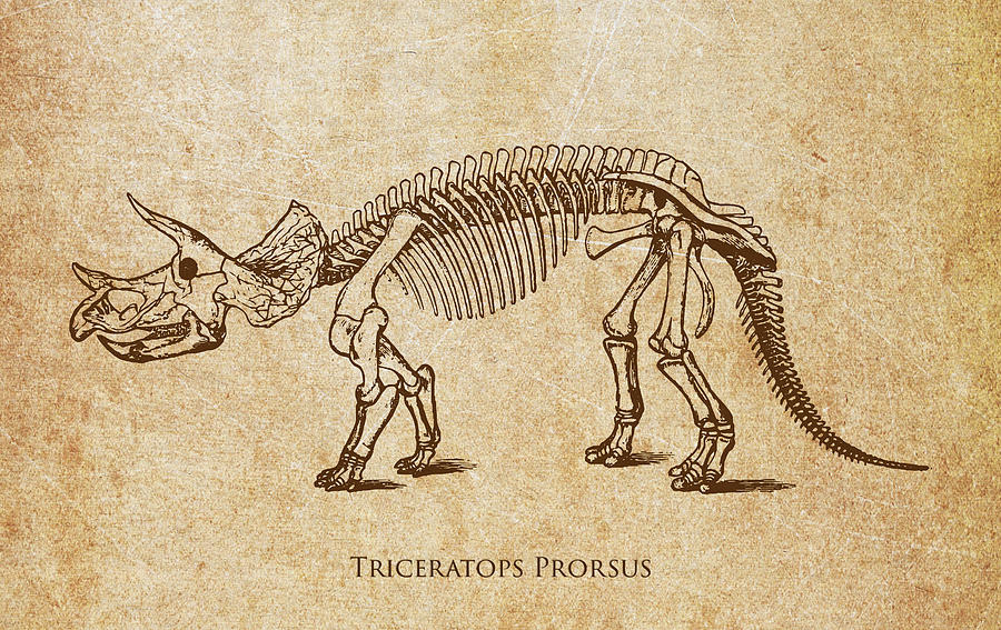 900x567 Dinosaur Triceratops Prorsus Digital Art By Aged Pixel
