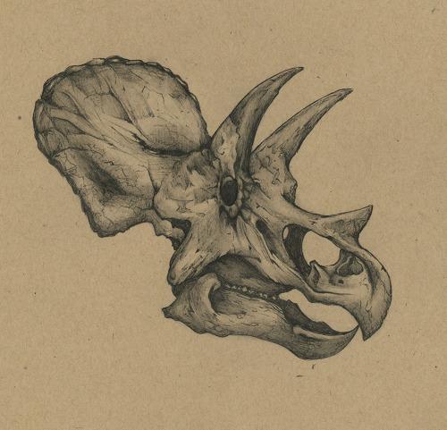 500x481 Paleo Study Of A Triceratops Skull. Tattoos