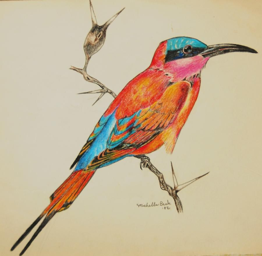 900x879 Beautiful Bird Drawings Bird Art Drawings , Birdstropical