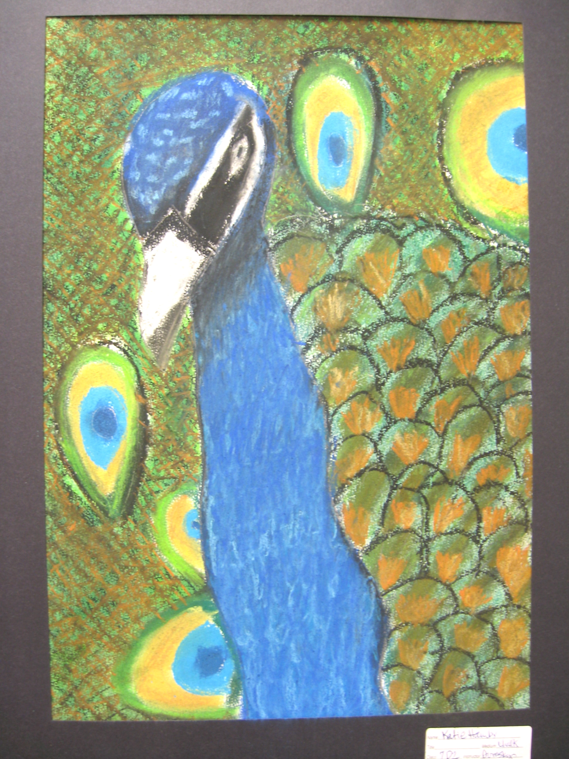 1944x2592 The Smartteacher Resource Tropical Birds In Chalk Pastel