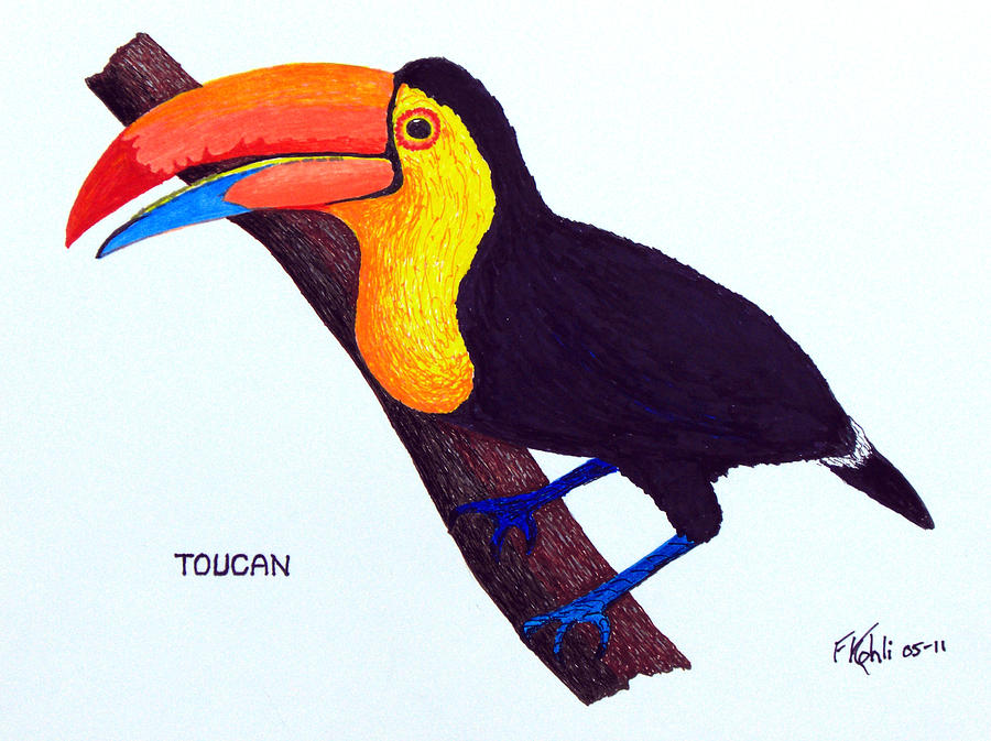 900x673 Toucan Drawing By Frederic Kohli