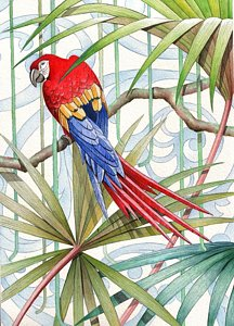 216x300 Tropical Bird Drawings Fine Art America