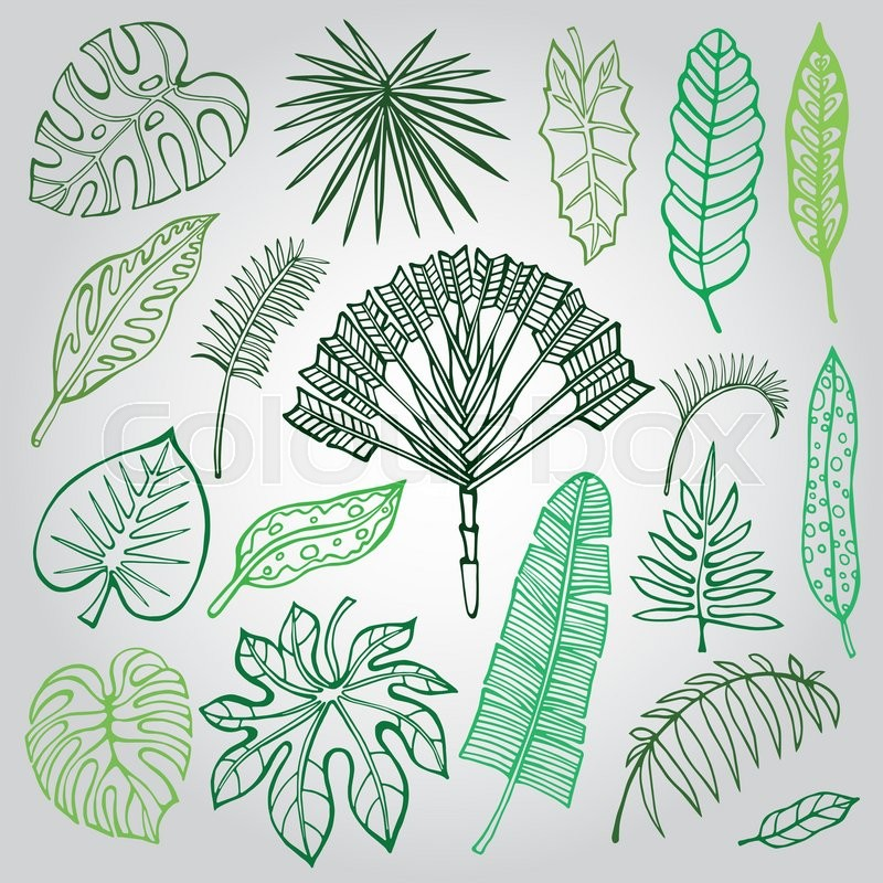 800x800 Tropical Palm Leaves Set.vector Leaf,outline Drawing In Vintage