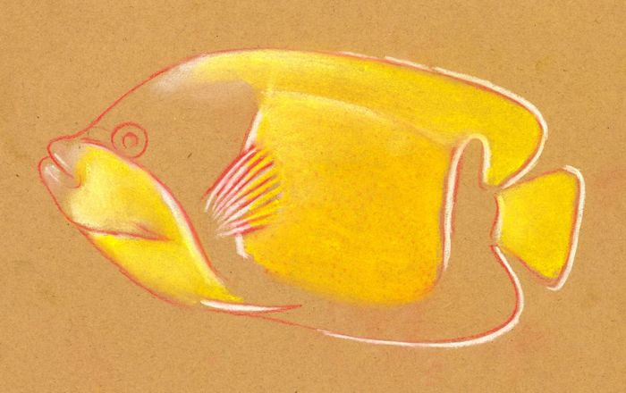 700x440 How To Draw A Tropical Fish