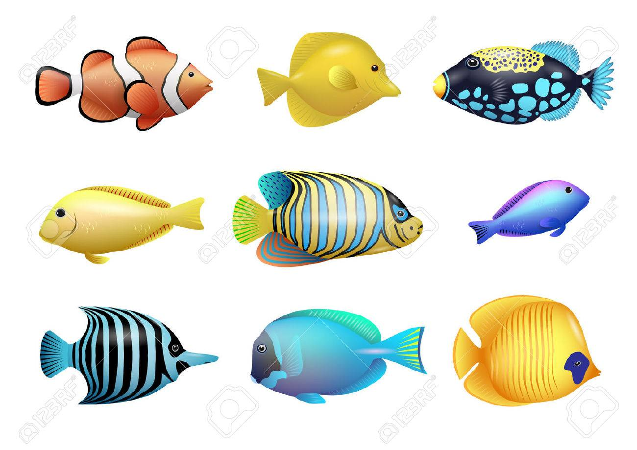 1300x919 Set Of Drawings Of Bright Exotic Tropical Fish From Coral Reefs