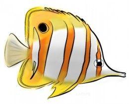 260x210 Tropical Fish Coloring Page Marine Fish, Tropical Fish And Aquariums