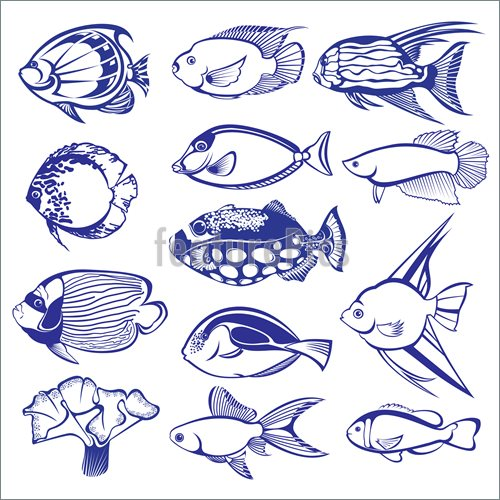 500x500 Tropical Fish Illustration