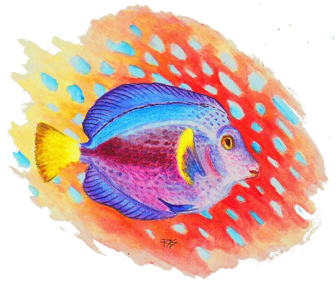 691x590 Tropical Fish Amp Mi In Derwent Wash Pencils