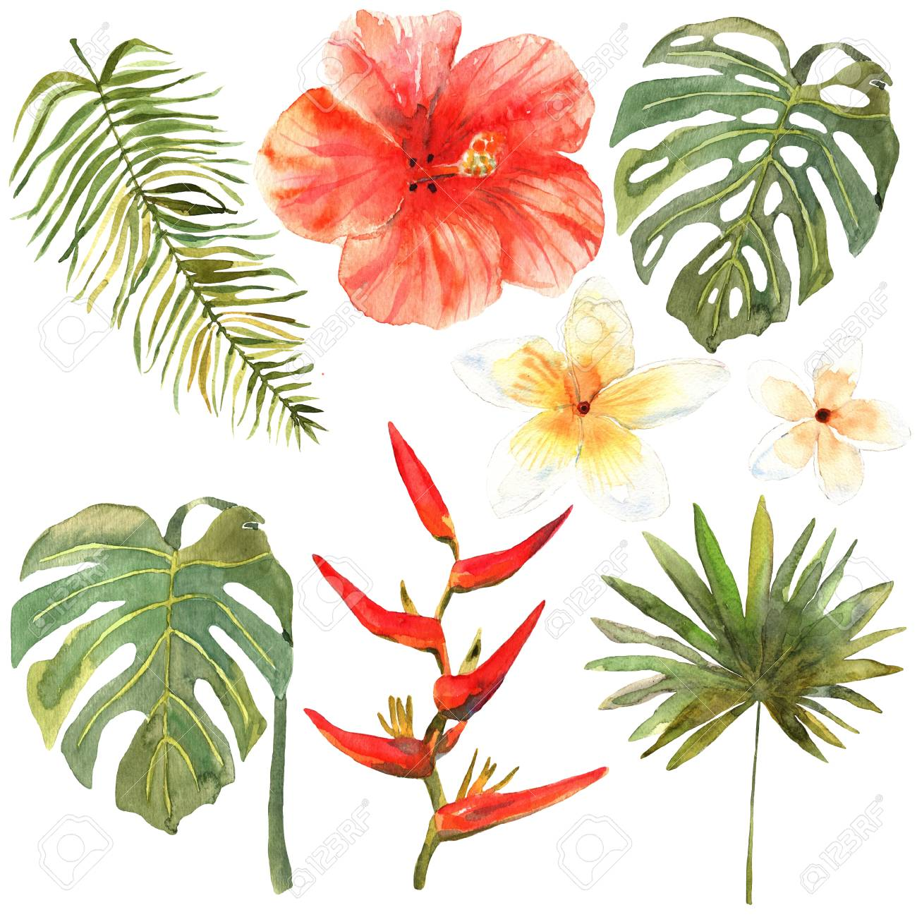 1300x1300 Floral Set. Collection With Tropical Leaves And Flowers, Drawing