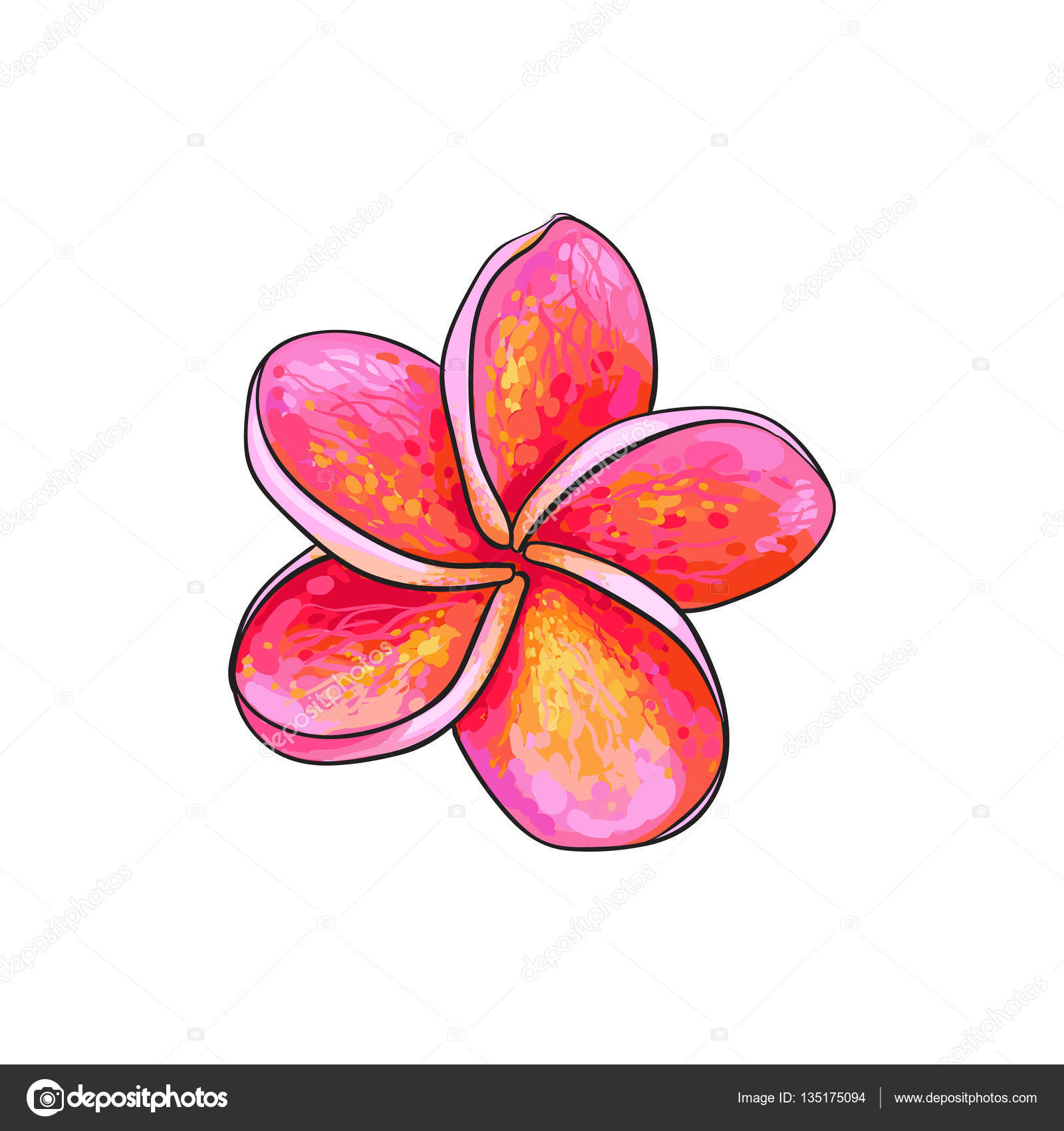 1600x1700 Single Pink Plumeria, Frangipani Tropical Flower, Sketch Vector